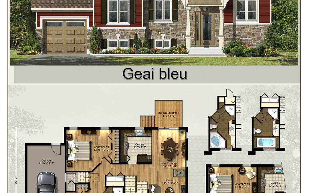 Geais_bleu plan